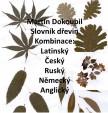Slovník dřevin 1998